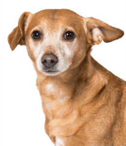 Über uns - das Simplex Team - Hund Joni