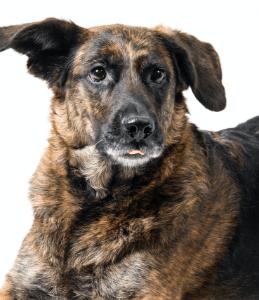 Über uns - das Simplex Team - Hund Lana