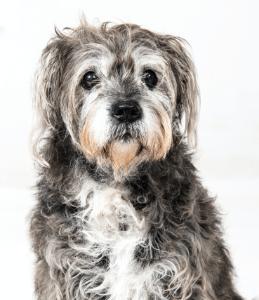 Über uns - das Simplex Team - Hund Chuchi