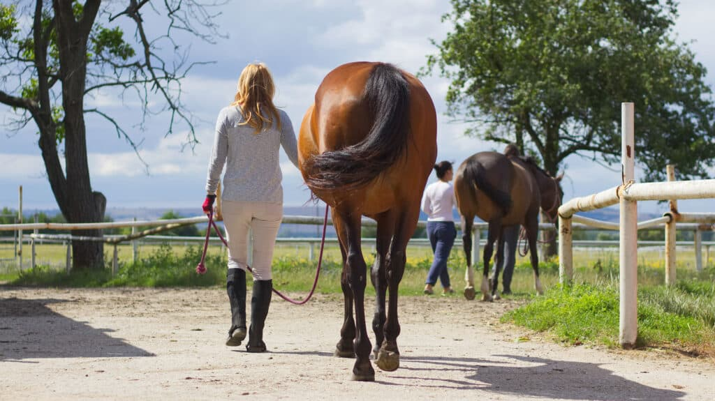 Tierhalterhaftpflichtversicherung Fallbeispiel: Pferd schlägt aus