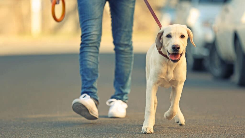 Tierhalterhaftpflichtversicherung Fallbeispiel: Spaziergang mit Hund