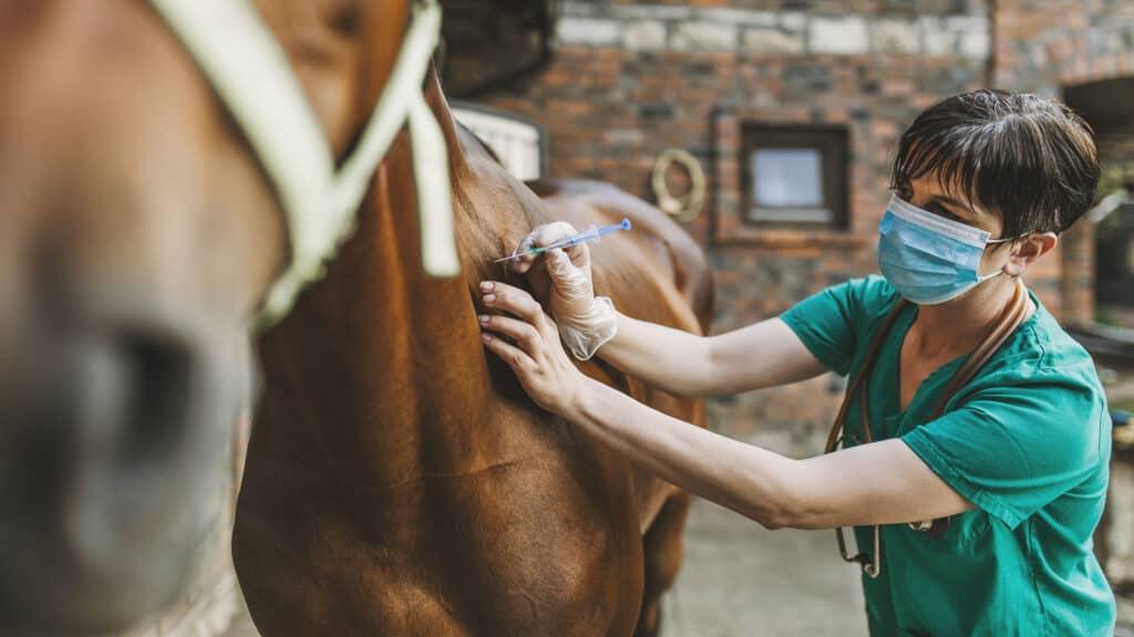 Tierkrankenversicherung - Fallbeispiel: Kolik