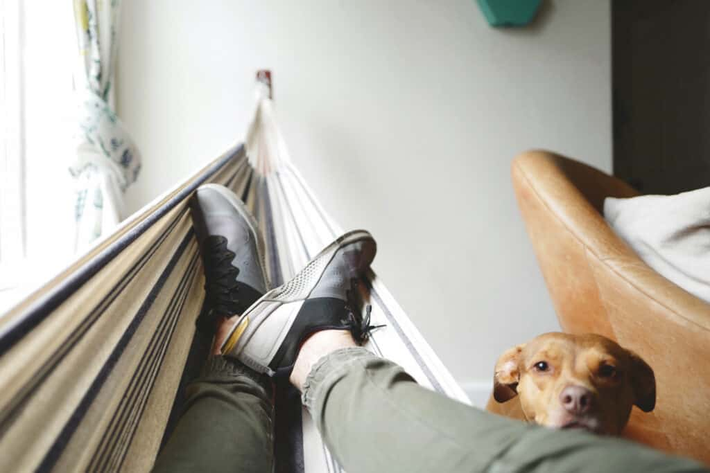 Beratung Versicherung und Finanzierung für Tierhalter