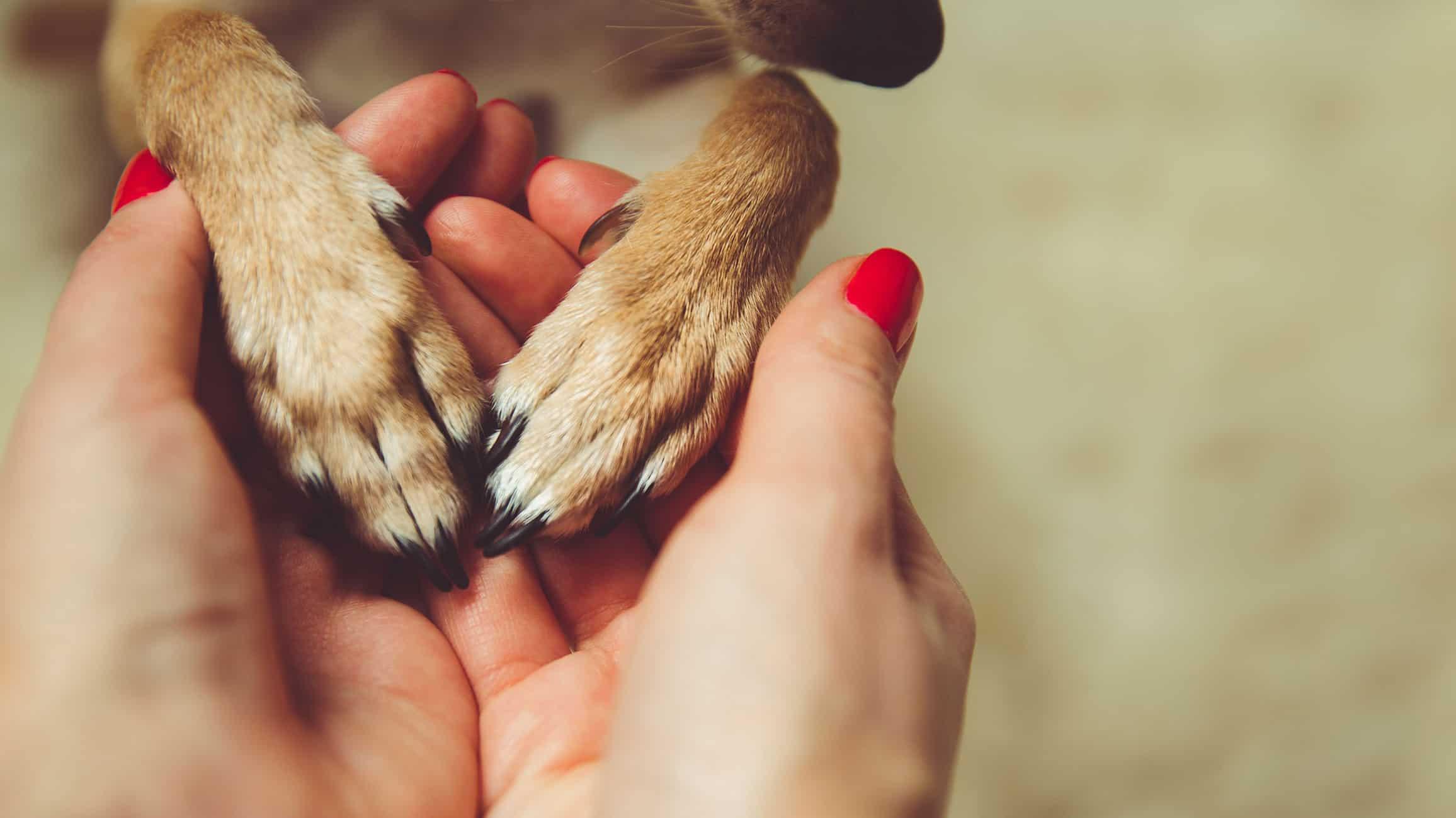 Versicherungen für Tiere - Tierschutz als Herzensangelegenheit