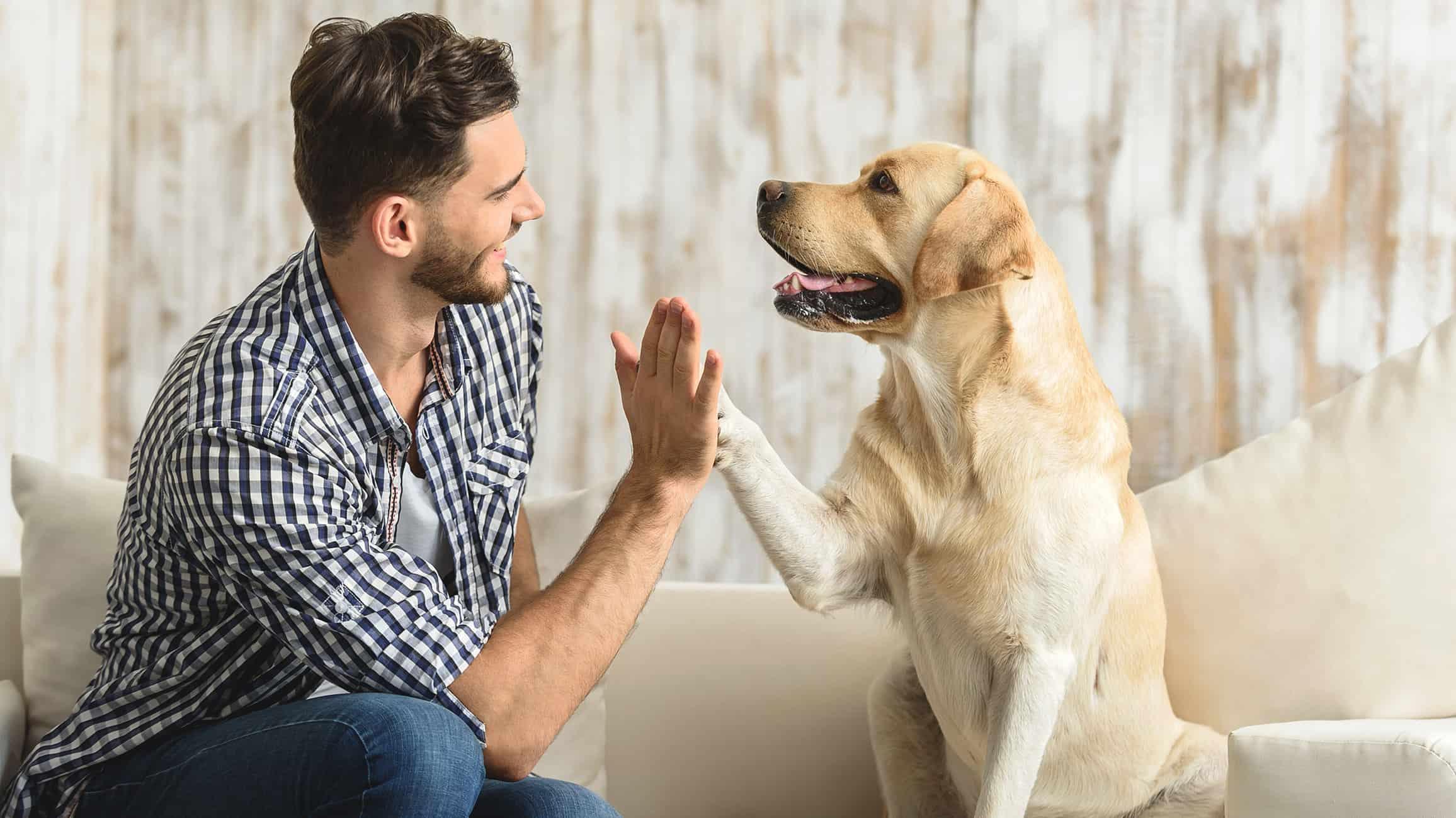 Versicherungen für Tiere - Mehrwert für Tiere